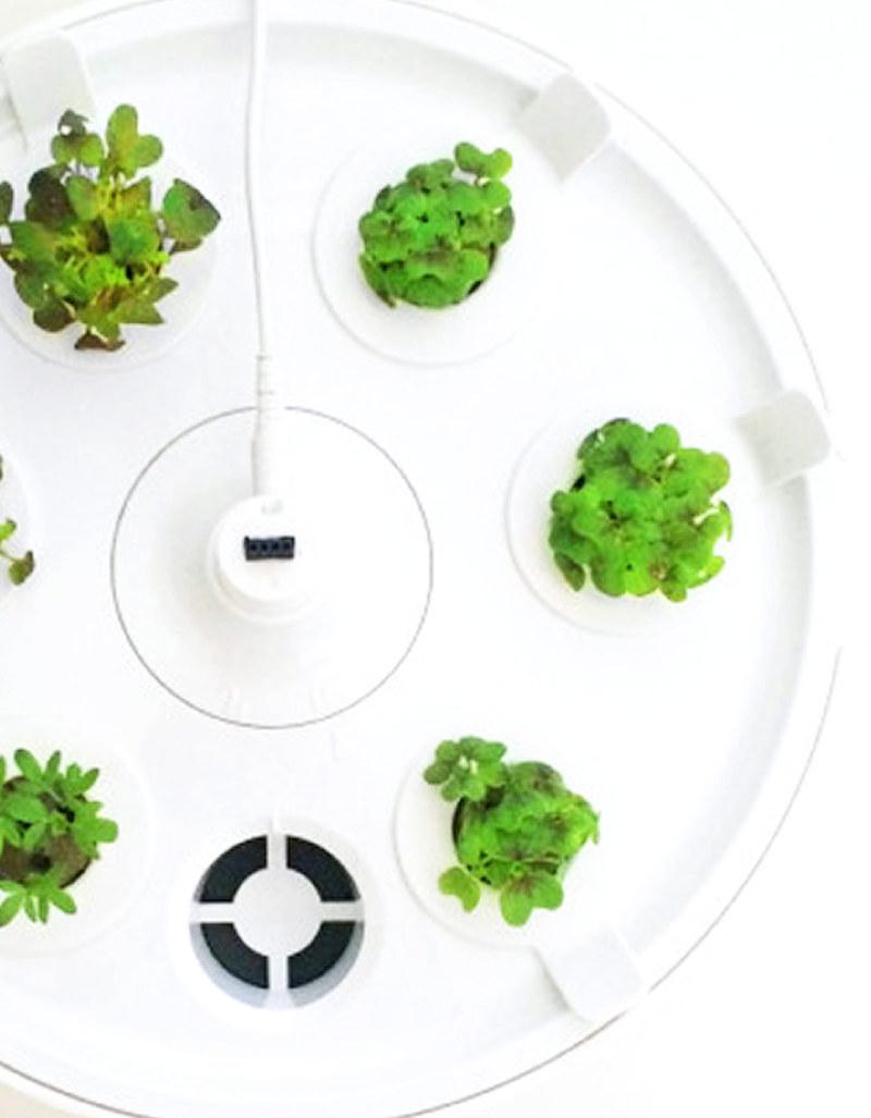 plantui 6 smart garden white other kitchen dining house virgin megastore. Black Bedroom Furniture Sets. Home Design Ideas
