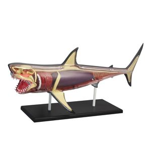 Discovery Mindblown Anatomy 4D Shark