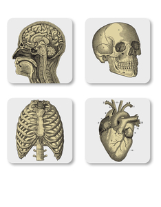 Magpie Curios Coasters Biology [Set of 4]