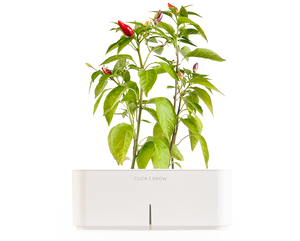 Click & Grow Starter Kit With Chili Pepper White