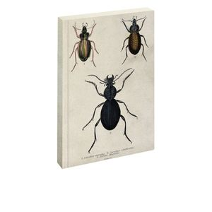 Jay Biologica Beetle Notebook