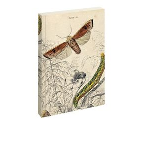 Jay Biologica Moth Notebook