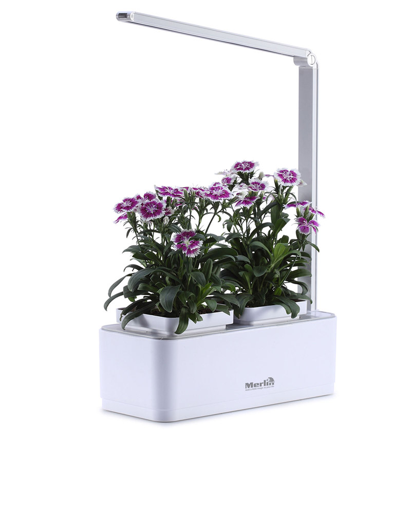 Merlin Desk Garden Lifestyle For Her Gift guide Selection